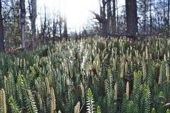 Roliga växter Royaltyfria Foton