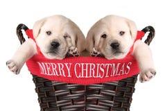 roliga valpar för jul Arkivbilder
