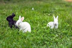 Roligt behandla som ett barn kanin royaltyfri fotografi