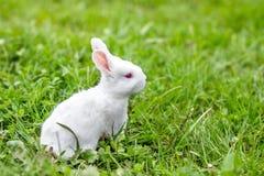Roligt behandla som ett barn kanin royaltyfria foton