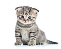 Roligt behandla som ett barn kattkattungen royaltyfria foton