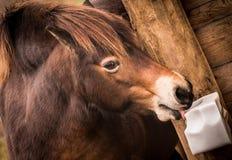 Roligt brunt hästslut upp huvudet royaltyfri fotografi