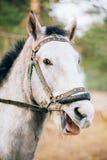 Roligt brunt hästslut upp huvudet Arkivfoton