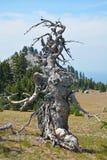 Roligt dött träd Arkivbilder