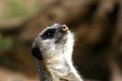 roligt djur Arkivfoto