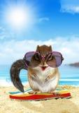 Roligt djur på sommarferie, ekorre på stranden royaltyfri fotografi
