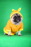 roligt husdjur för hund fotografering för bildbyråer