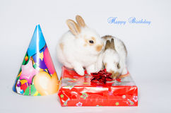 Roligt kort för lycklig födelsedag med kaniner Arkivfoto