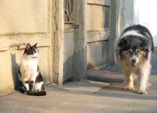 Roligt möte för katt och för hund Arkivfoto