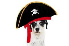 Roligt piratkopiera dräkthunden som firar karneval, halloween eller nytt år bakgrund isolerad white arkivbilder