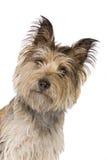 roligt se för kamerahund arkivfoton