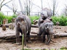 Roligt skämtsamt behandla som ett barn den asiatiska elefanten i zoo Arkivbilder
