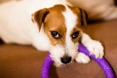 Roligt spela för hund royaltyfri fotografi