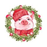 Roligt svin och julkrans Gullig vattenfärgillustration royaltyfri illustrationer