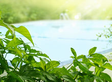 Roślina i drzewny tropikalny wokoło pływackiego basenu w świetle słonecznym, miękka ostrość Fotografia Royalty Free