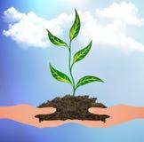 Roślina kiełkuje na palmach Zdjęcia Stock