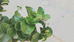 Roślina z trochę biel Zdjęcie Stock