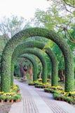 Rośliny drzwi Obraz Stock