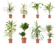 rośliny garnka drzewo Zdjęcie Stock