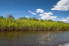 Rośliny i krzaki r wzdłuż banków rzeka Zdjęcia Royalty Free