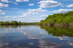 Rośliny i krzaki r wzdłuż banków rzeka Zdjęcie Stock