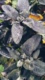 Rośliny i natura Obrazy Stock