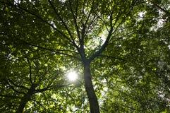 Rośliny las Zdjęcia Royalty Free