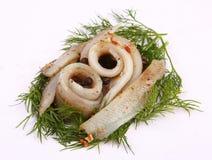 Rolka z śledziem Śledź na pertse esklyuziv naczynie ryby Kartoteka gromadnik Konserwacja śledź Zdjęcia Royalty Free