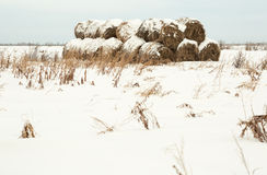 Rolki haystack Fotografia Royalty Free