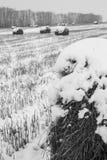 Rolki siano na śnieżystym polu obraz stock