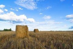 Rolki siano w polu Zdjęcie Stock
