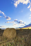 Rolki siano w polu przy zmierzchem Fotografia Stock