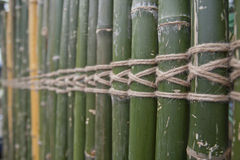 Roll bamboo. Pattern of tropical bamboo roll Stock Photography
