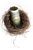 Roll of banknotes in nest. Stock Images