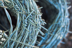 Roll of barb wire Stock Image