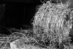 Roll of barbed wire with background copy space Stock Images