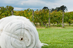 Roll of cover net to protect ripe grapes Royalty Free Stock Photography