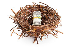Roll of dollar bills in birds nest  on white Stock Photography