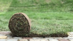 A roll of grass on the paving slab stock images