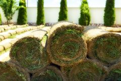 Roll grass on the ready lawn Stock Photos