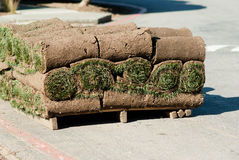 Roll of green grass. Stacks of rolled green grass on a pallet Stock Photography