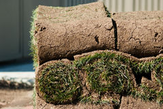 Roll of green grass. Stacks of rolled green grass on a pallet Stock Image