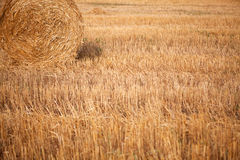 Roll of hay Stock Images