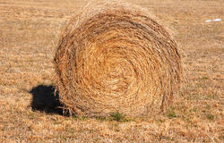 Roll of hay. A closeup of a hay roll Stock Images