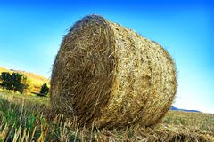 Roll of hay. On the countryside, bales, rural scene royalty free stock photos