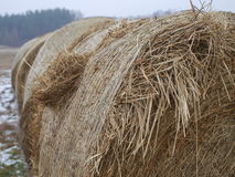 Roll of hay Stock Photo
