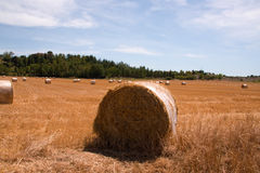 Roll of hay bales in field Royalty Free Stock Photo