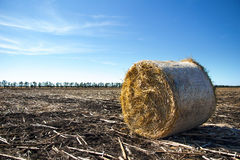 Roll of hay on field Stock Photo