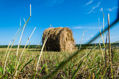 A roll of hay in the field Royalty Free Stock Photo