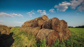 Roll in the hay stock video footage